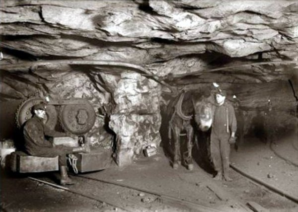 Cheval dans les mines : États-Unis
