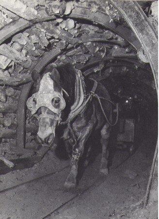 Cheval dans les mines : Choix des chevaux