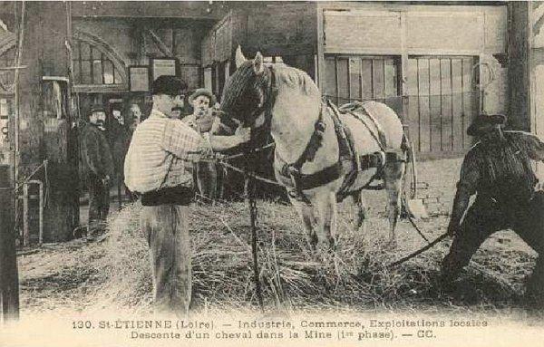 Cheval dans les mines : Dressage et utilisation du cheval dans les mines