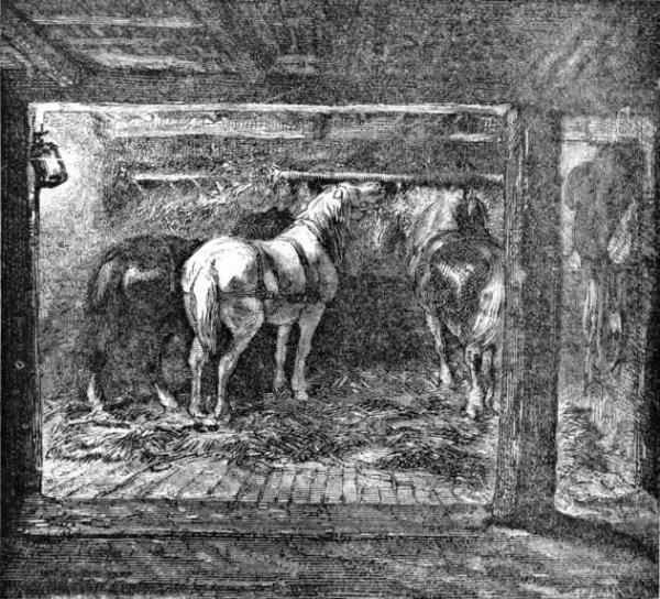 Cheval dans les mines : Conditions de repos