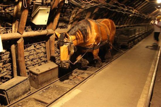 Cheval dans les mines : Légendes à propos des chevaux des mines