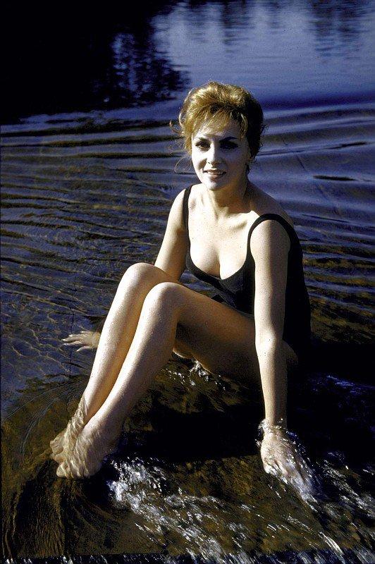 Gina Lollobrigida : Galerie de photos