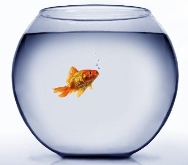 Petit poisson !!