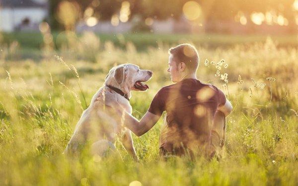 Qu'est-ce qu'un homme et un chien ont en commun ?