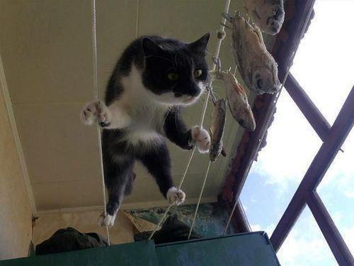 Chat : L'éducation des chatons