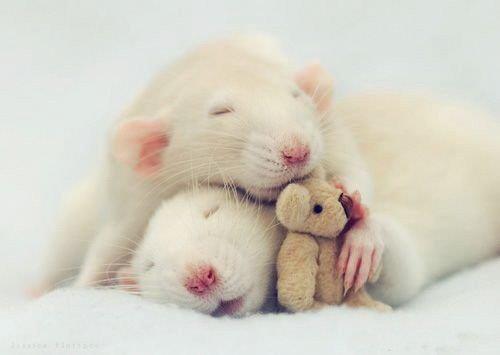 Hamster : Habitat