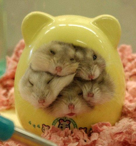 Hamster : Littérature