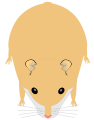 Hamster : Robes
