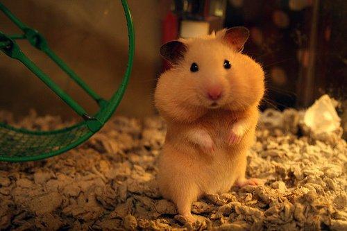 Hamster : Films et séries télévisées
