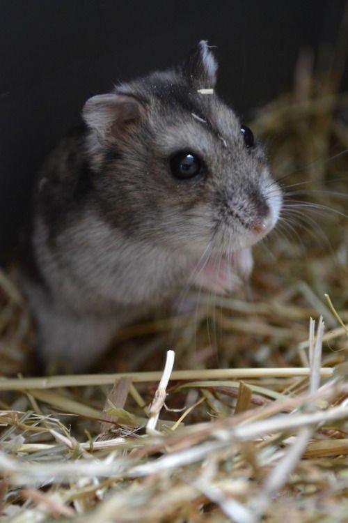 Hamster : Jeux