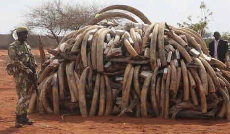 Les éléphants de l'Afrique Subsaharienne décimés