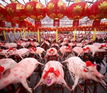 Cochon : En chine
