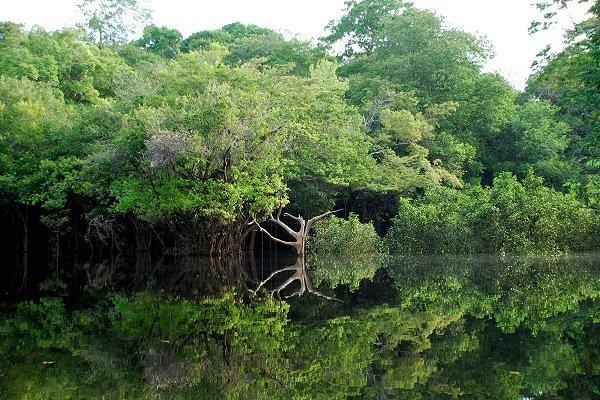Amazonie : Environnement
