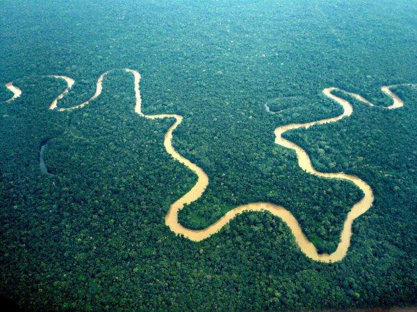 Amazonie : La diversité biologique