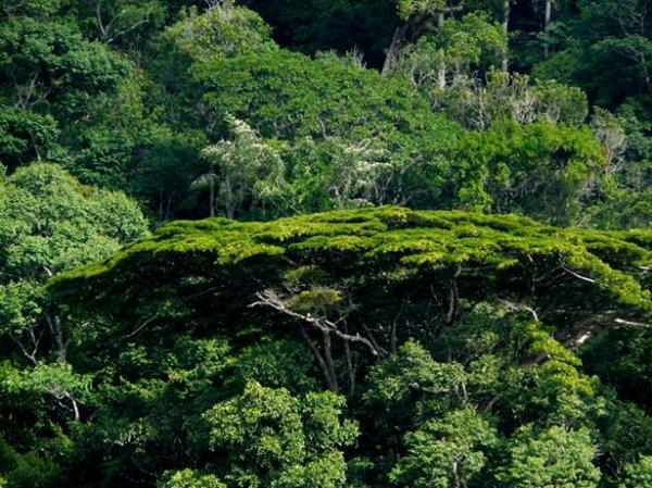 Amazonie française