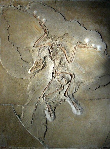 Dinosaures à plumes : Les premières hypothèses
