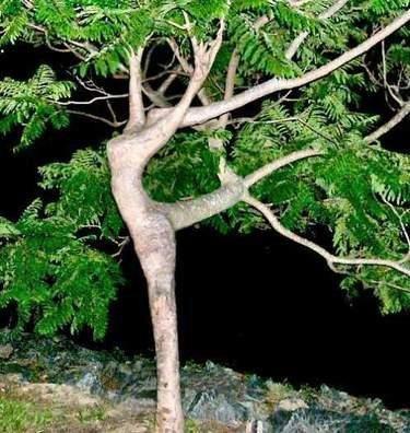 Grâce de l'arbre...