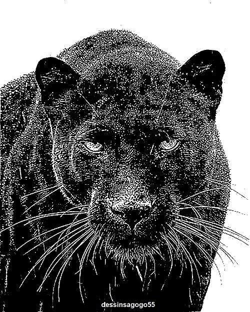 Panthère noire (animal)