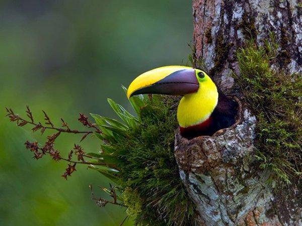 Clichés Exceptionnels de la Nature Comme vous ne l'avez Jamais Vue