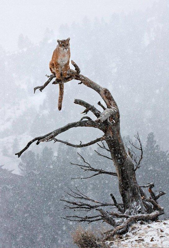 Animaux qui Fusionnent avec la Neige