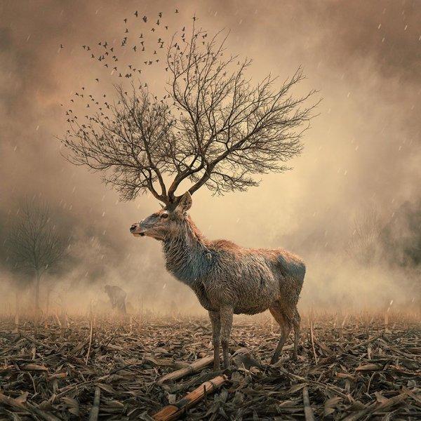 Caras Ionut : Photographies d'un Monde Poétique, artiste et photographe roumain