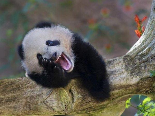 Animaux mignons qui sourient