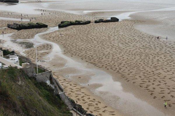 Ils dessinent 9000 silhouettes sur une plage du débarquement