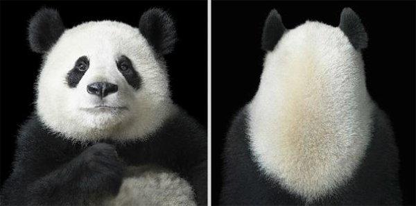 Tim Flach Dresse des Portraits D'animaux Plus Humains que Jamais