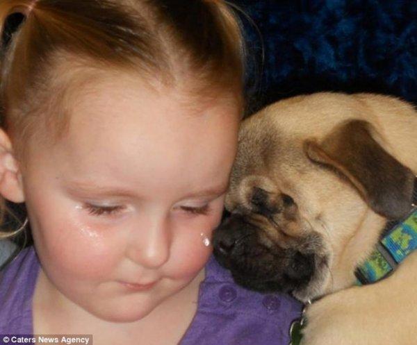 Adorables Chiens de Thérapie, la Magie de la Compassion