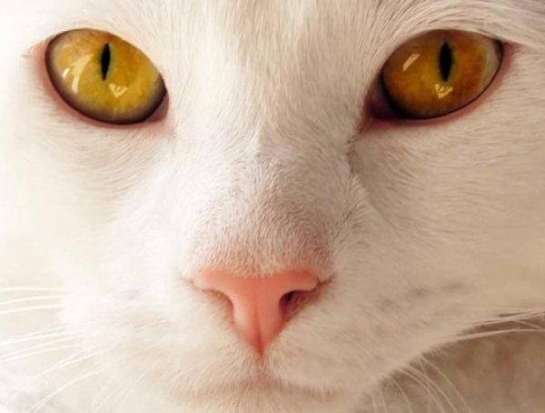 Faits Incroyables que Vous ne Saviez (Peut-Etre) pas sur les Animaux