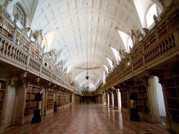 Une bibliothèque entretenue par des chauve-souris