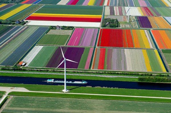 photos d'incroyables champs de tulipes colorés