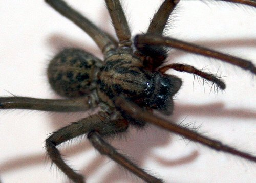 Araignée en Chine