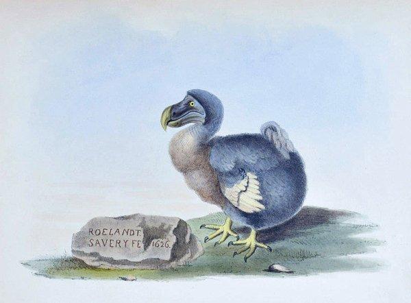 Dodo : Culture populaire