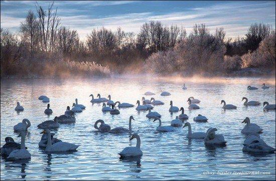 Le lac Svetloe en Sibérie: le vrai lac des cygnes