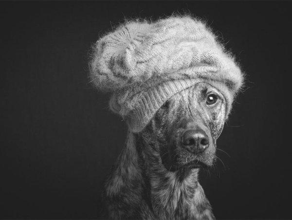 Elke Vogelsang : Les portraits de chiens