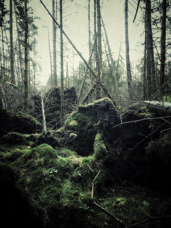 Julian Calverley prend des photos exceptionnelles de la nature avec un simple Iphone