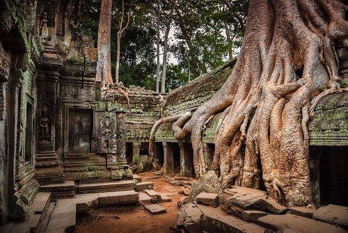 Les racines des arbres gagnants de leur bataille contre le béton