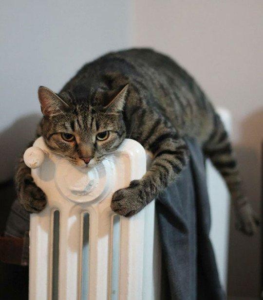 Animaux la chaleur plus que tout.