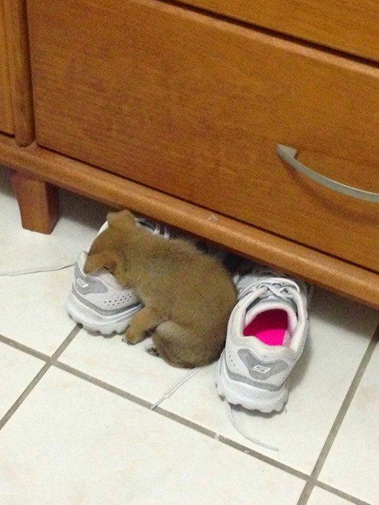 Les chiots peuvent dormir partout