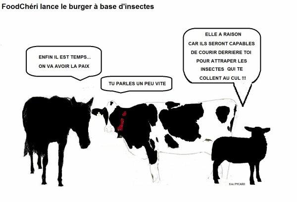 FoodChéri lance le burger à base d'insectes