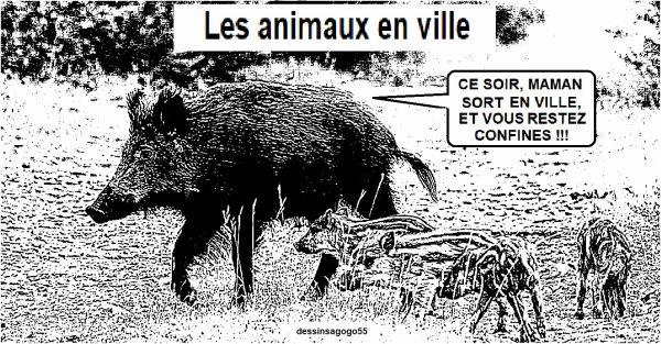 Coronavirus : Les animaux en ville