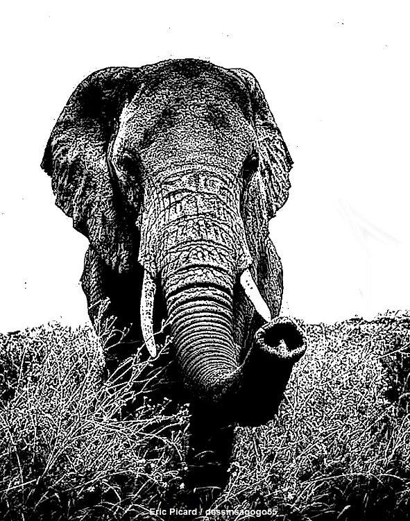 Éléphant : Trompe