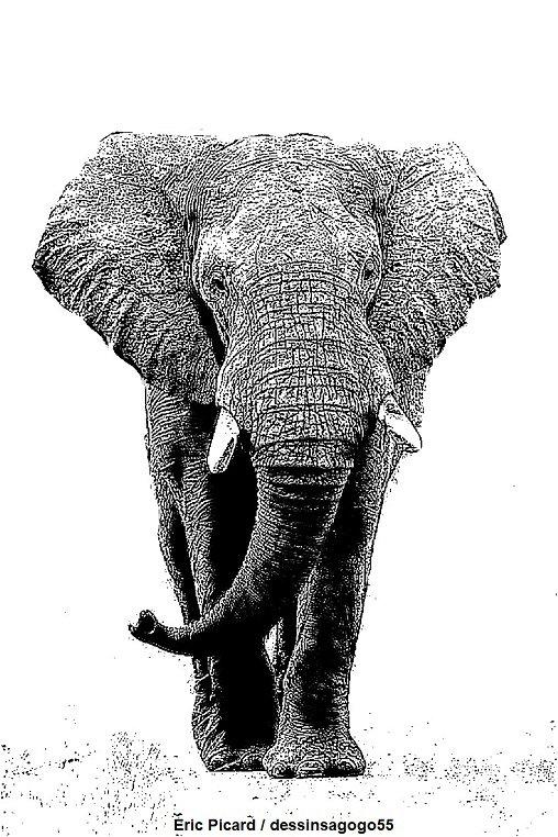 Éléphant : Peau