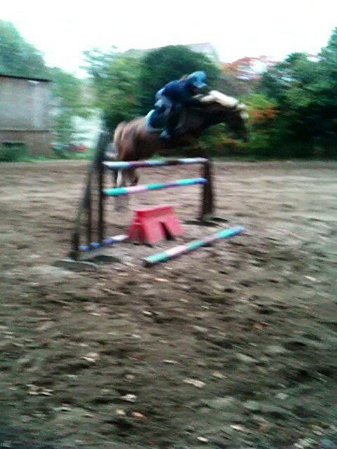 cours d'obstacle (1m40) <3