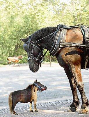 """Résultat de recherche d'images pour """"Thumbelina le plus petit poney du monde"""""""