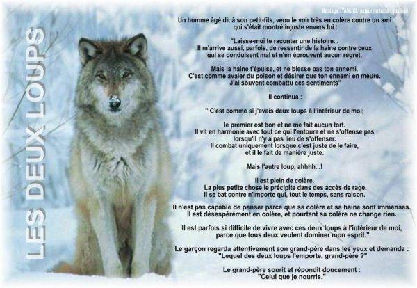 Les deux loups !