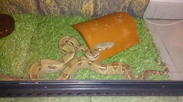 notre serpent a moi et mon cheri