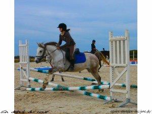 Bienvenue sur le blog du chesnoy ( pour dorine) / Joncs ( pour wendy )