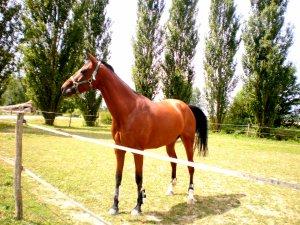 La plus belle conquête de L'homme ces le cheval =)